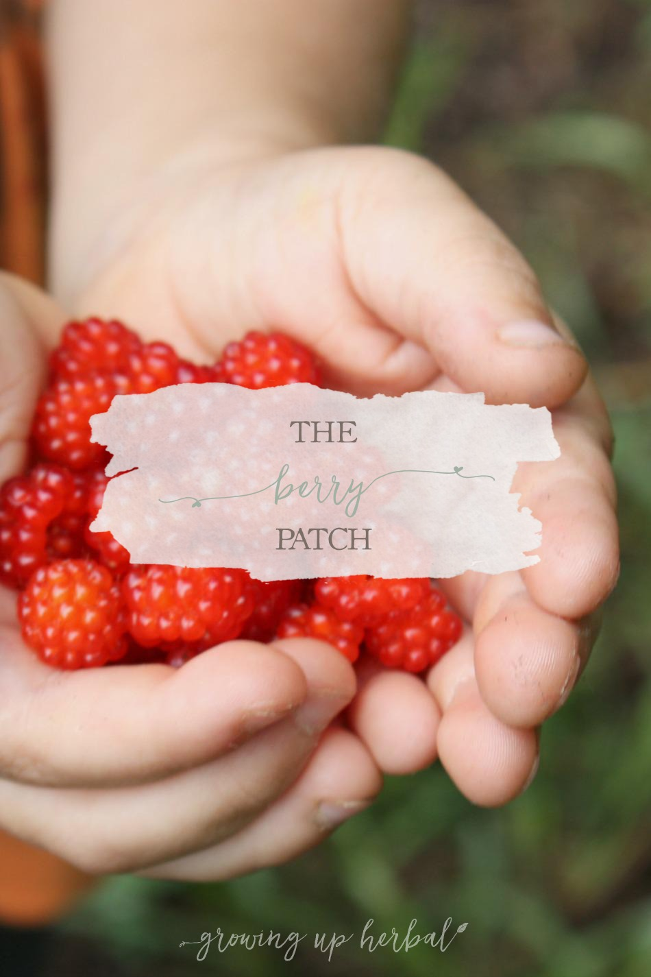 The Berry Patch | Growing Up Herbal | The boys are off on an adventure to a secret berry patch. Plus, learn why raspberries are so healthy for you!