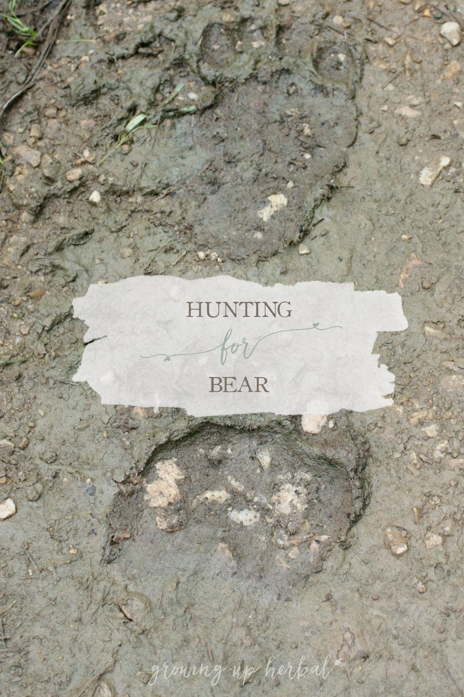 Hunting For Bear | Growing Up Herbal | Come along an outdoor adventure and track a wild bear with us!