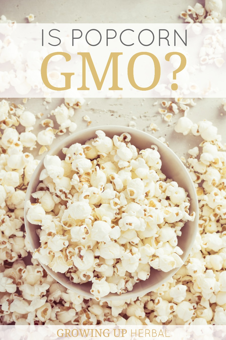 Is Popcorn GMO? | Growing Up Herbal | Corn and popcorn come from two different seeds. Seeing as how corn is a big GMO crop, have you ever wandered if popcorn is GMO too?