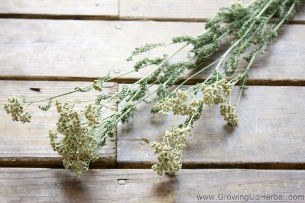 Dried Yarrow