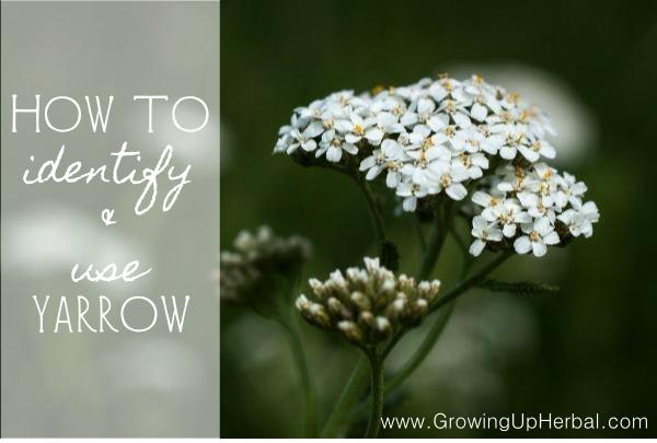 Tennessee Flower Identification - Flowers Healthy