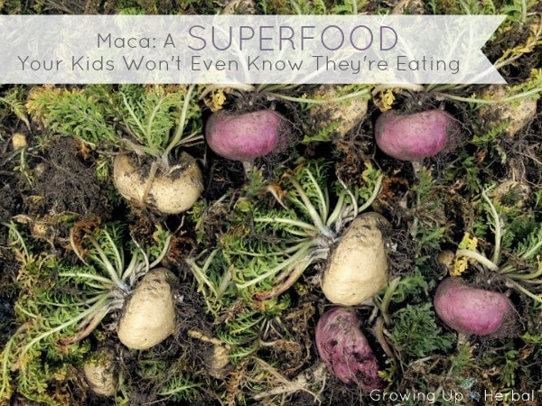 Maca: A Superfood Your Kids Won't Even Know They're Eating | GrowingUpHerbal.com