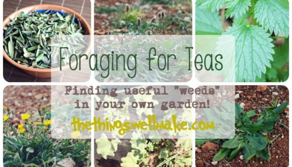 Things I Love - March | GrowingUpHerbal.com - I love learning how to identify and gather herbs in the wild. Here are several that are easy to find and make great teas!