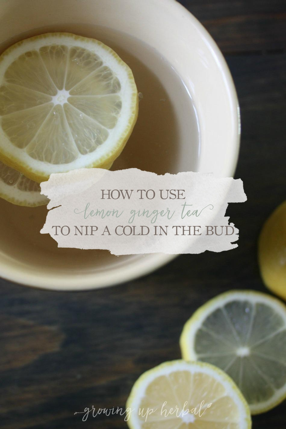 How To Use Lemon Ginger Tea To Nip A Cold In The Bud | Growing Up Herbal | Drink stimulating lemon ginger tea at the first sign of a cold to nip it in the bud!