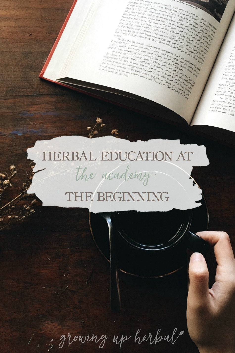 Herbal Education At The Academy: The Beginning | Growing Up Herbal | Interested in going to herbal school? Here's a sneak peek at the Herbal Academy's Intermediate herbal course!