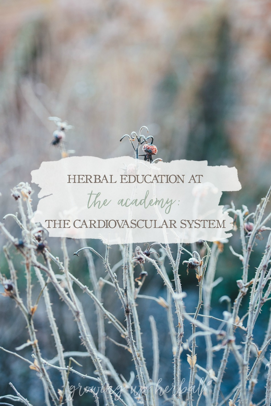 Herbal Education At The Academy: The Cardiovascular System | Growing Up Herbal | Interested in going to herbal school? Here's a sneak peek at the Herbal Academy's Intermediate herbal course!