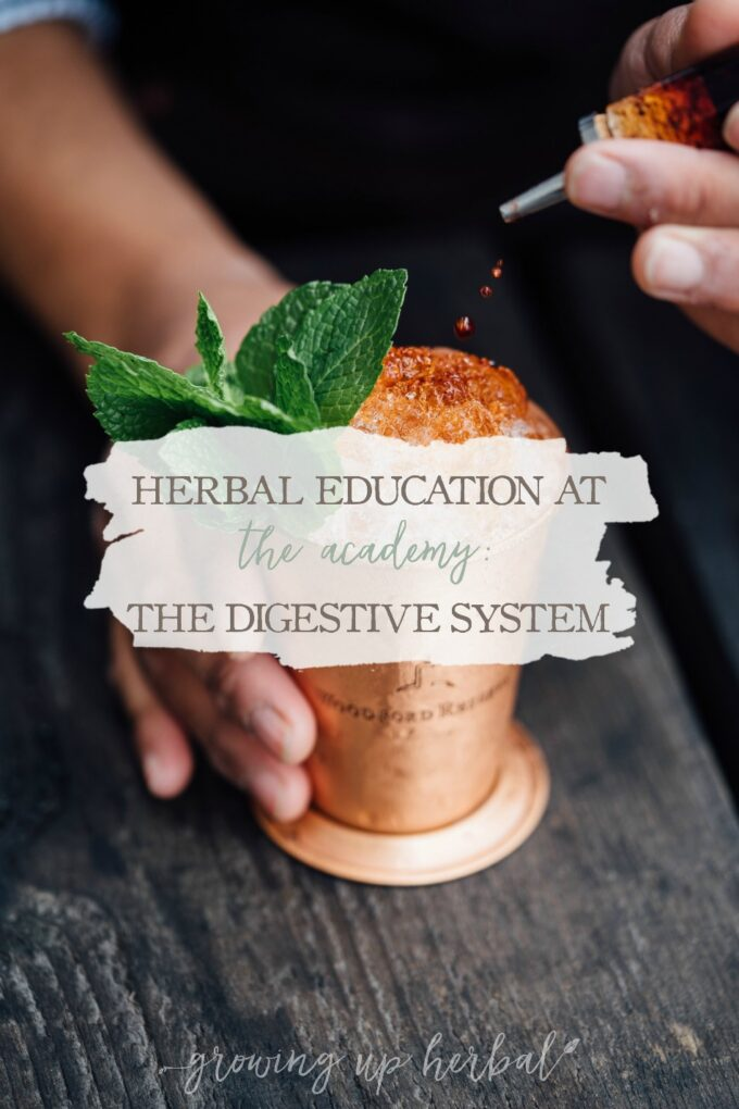 Herbal Education At The Academy: The Digestive System | Growing Up Herbal | Interested in going to herbal school? Here's a sneak peek at the Herbal Academy's Intermediate herbal course!