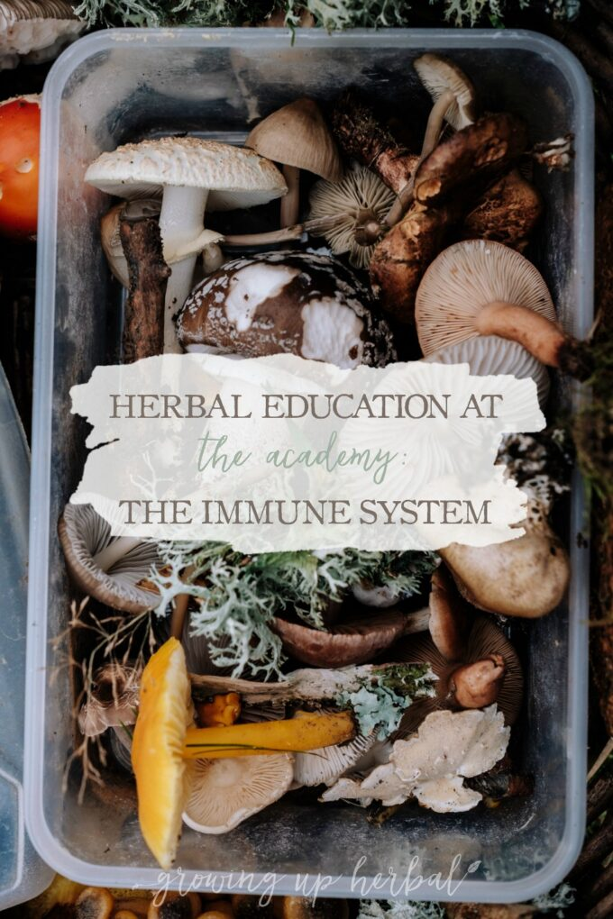 Herbal Education At The Academy: The Immune System   Growing Up Herbal   Interested in going to herbal school? Here's a sneak peek at the Herbal Academy's Intermediate herbal course!