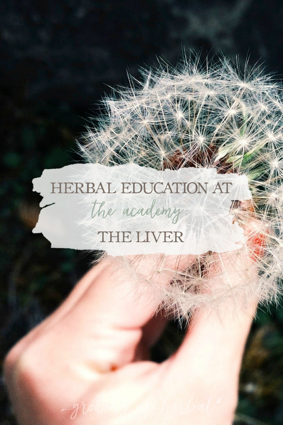 Herbal Education At The Academy: The Liver | Growing Up Herbal | Interested in going to herbal school? Here's a sneak peek at the Herbal Academy's Intermediate herbal course!