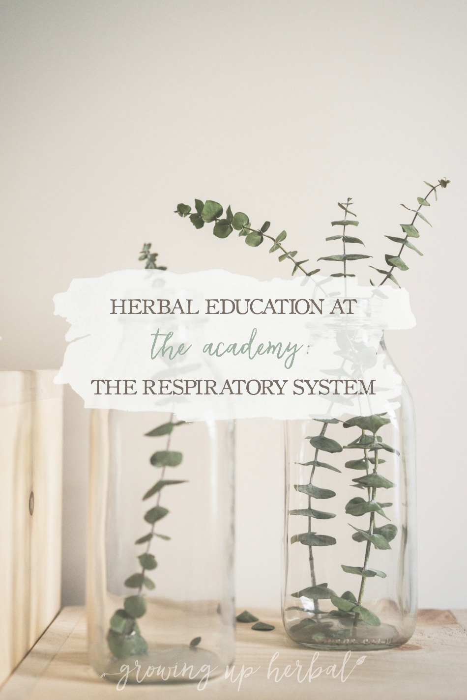 Herbal Education At The Academy: The Respiratory System | Growing Up Herbal | Interested in going to herbal school? Here's a sneak peek at the Herbal Academy's Intermediate herbal course!