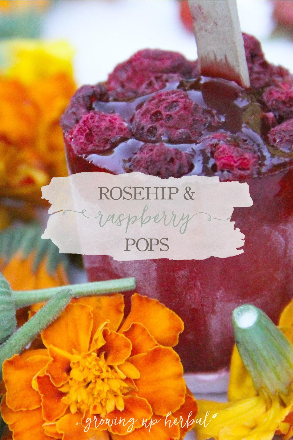 Rose Hip and Raspberry Popsicles | Growing Up Herbal | Yum! These herbal popsicles are easy to make and will hit the spot on a hot summer day!