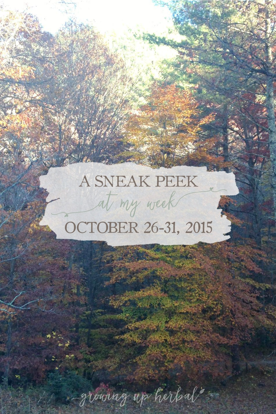 A Sneak Peek At My Week! | Growing Up Herbal | Get a sneak peek at some highlights from my week: Oct.  26 - 31, 2015!