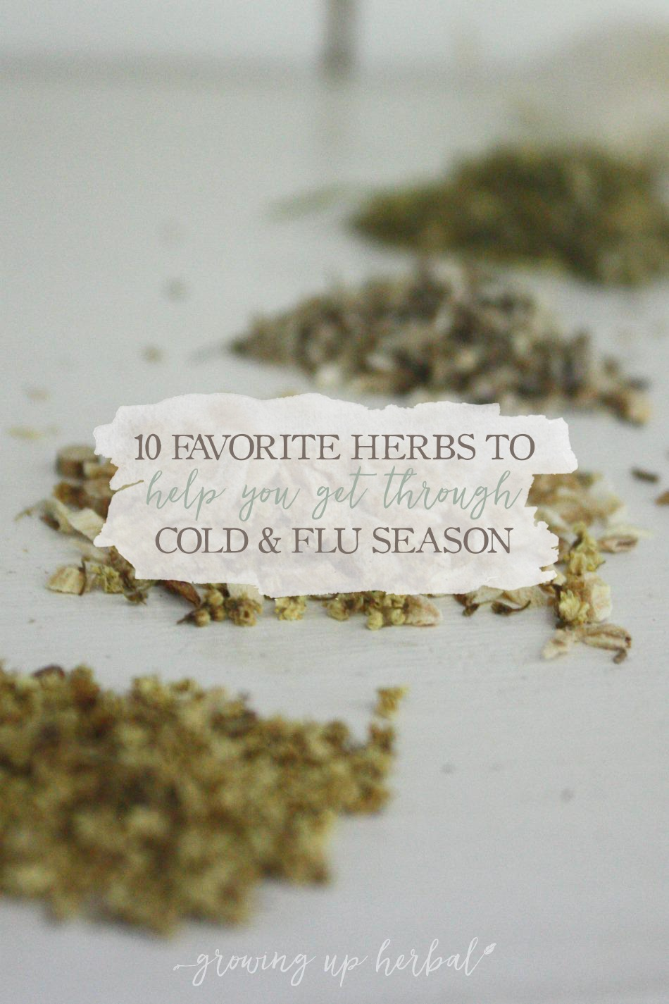 10 Favorite Herbs To Help You Get Through Cold & Flu Season | Growing Up Herbal | Learn which herbs to have on hand during cold and flu season and how to use them.