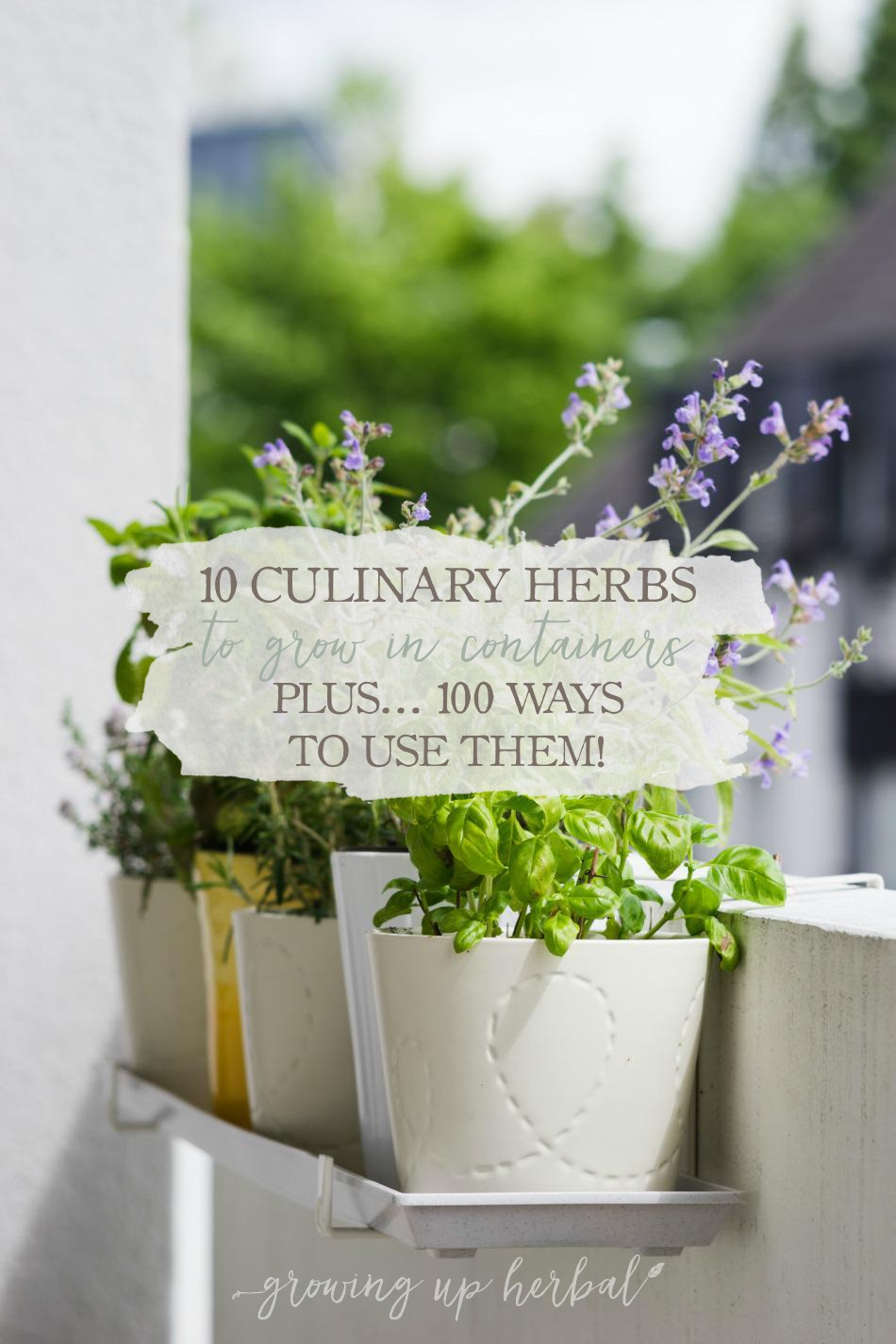 10 Culinary Herbs To Grow In Containers (+ 100 Ways To Use Them) | Growing Up Herbal | 10 herbs to grow in containers and use in your homemade food, skincare, and medicinal products.