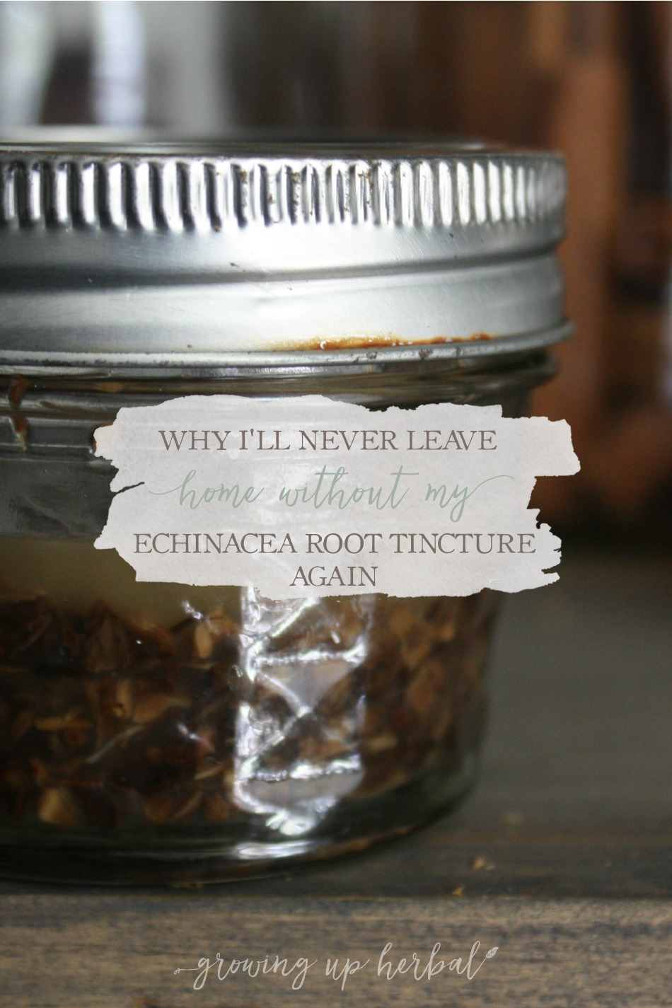 Why I'll Never Leave Home Without My Echinacea Root Tincture Again | Growing Up Herbal | Learn how to make a homemade echinacea root tinctures (and how I used it successfully with a strep throat infection).