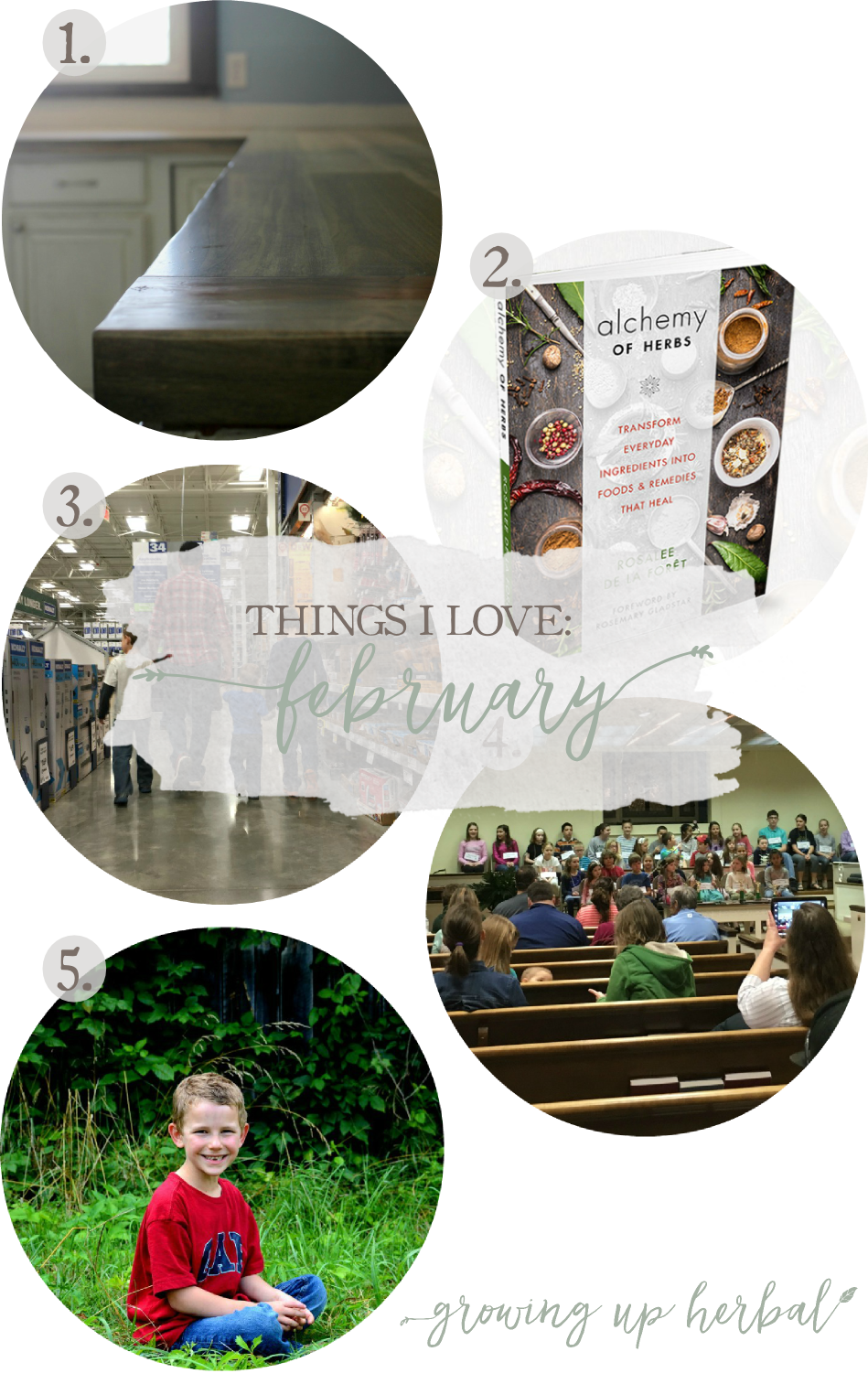 Things I Love: February 2017 | Growing Up Herbal | Today, I'm sharing 5 of my favorite things from the past month! Check it out!