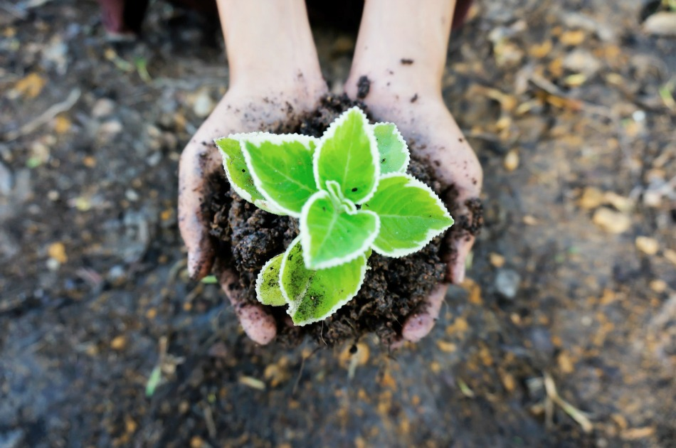 5 Steps to Start an Herb Garden This Year   Growing Up Herbal   Learn how to start an herb garden in 5 steps... from start to finish in this blog post!