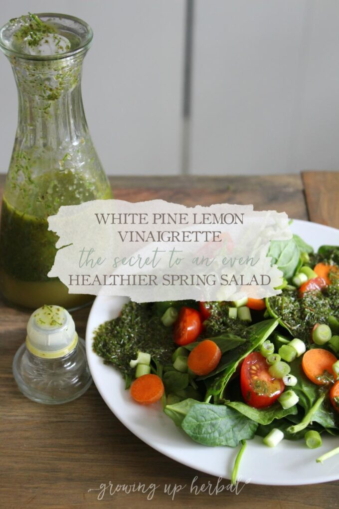 White Pine Lemon Vinaigrette: The Secret To An Even Healthier Spring Salad | Growing Up Herbal | This vinaigrette is perfect for a side salad. It's slightly tart, pleasing to the tongue, and supports your digestive and immune health!