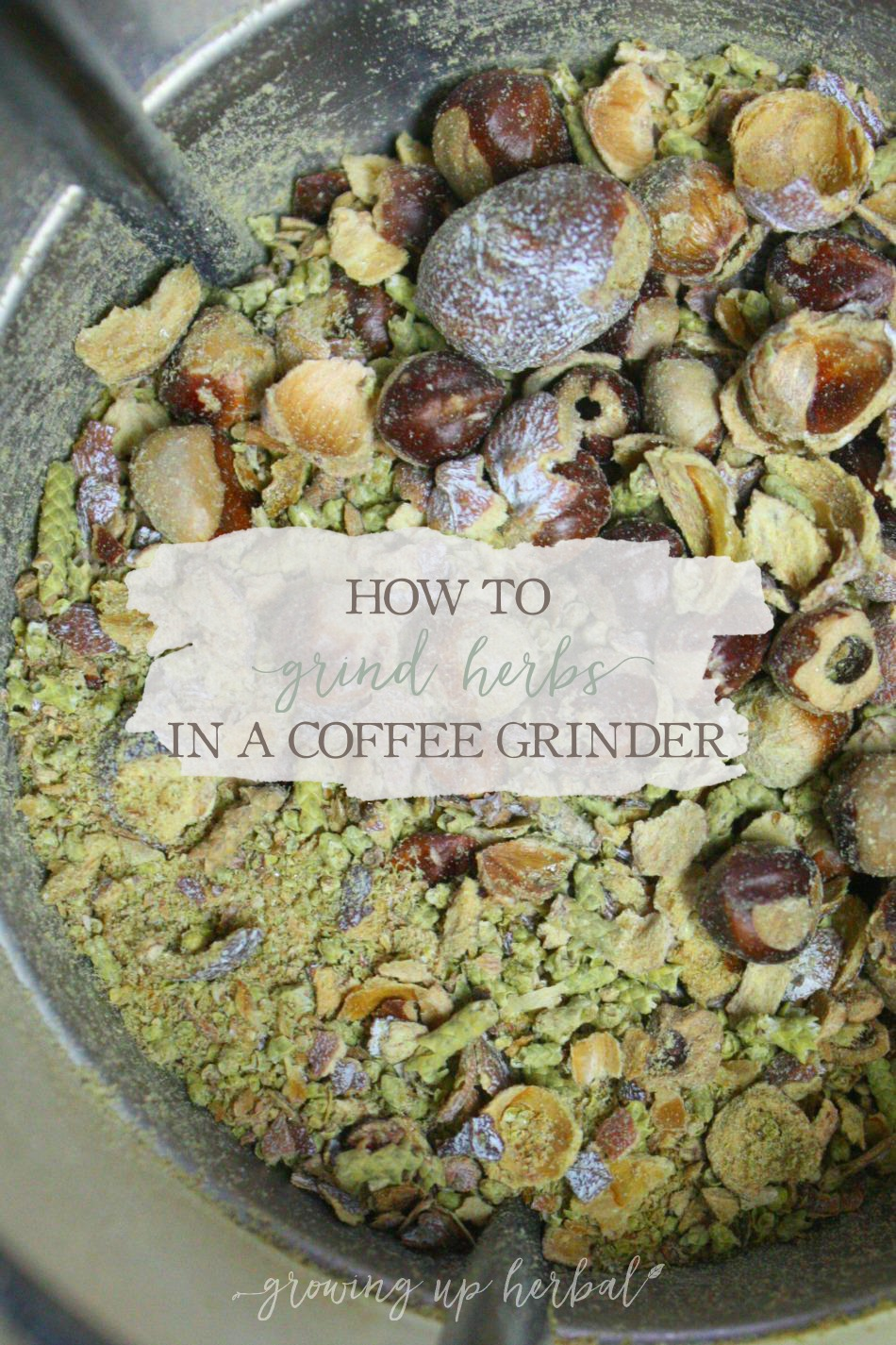How To Grind Herbs In A Coffee Grinder | Growing Up Herbal | Learn how to correctly grind herbs in a coffee grinder in order to extract more of their properties!