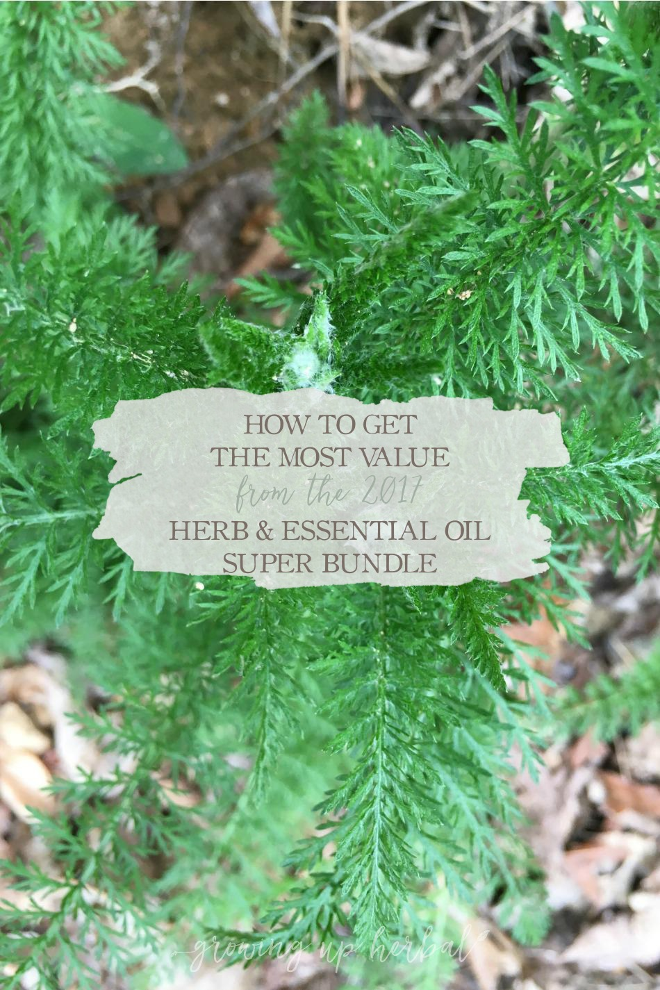 How To Get The Most Value From The 2017 Herb & Essential Oil Super Bundle | Growing Up Herbal | Here's how I get the most out of bundle sales. Plus, I'm sharing my top 10 picks from this year's Herb & Essential Oil Super Bundle!
