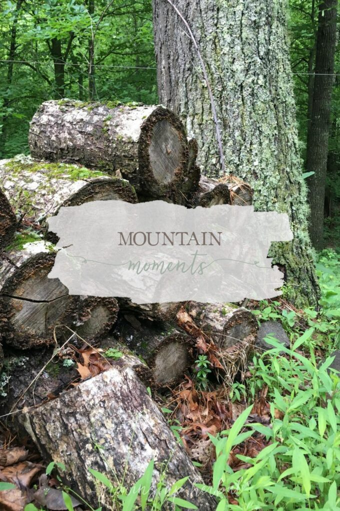 Mountain Moments | Growing Up Herbal | I'm sharing some of my favorite moments here on the mountain lately. Come check it out!