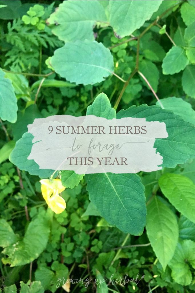 9 Summer Herbs To Forage This Year   Growing Up Herbal   Here are 9 summer herbs to forage right now. These herbs are abundant in the summer, and depending on where you live, they may be in your backyard, too!