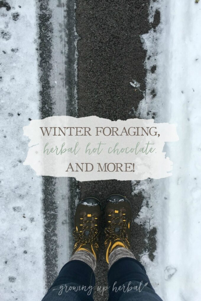 Winter Foraging, Herbal Hot Chocolate, and More!   Growing Up Herbal   Get a glimpse into one of my Letters to Natural Mamas emails. I'm talking foraging for herbs in winter and sharing an herbal hot chocolate recipe… and more!