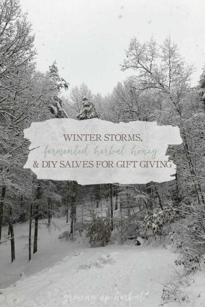 """Winter Storms, Fermented Herbal Honey Recipe, and DIY Salves for Gift Giving 