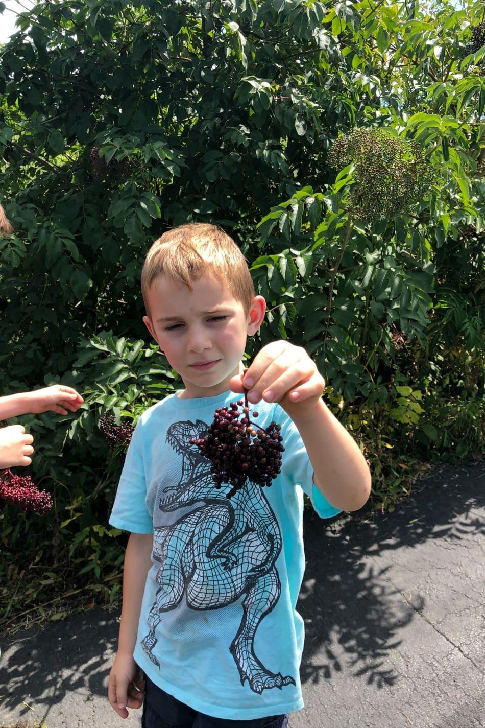 Harvesting & Preserving Elderberries | Growing Up Herbal | It's that time of the year! Elderberry harvesting season! I'm sharing a bit about harvesting and preserving elderberries for future use in this post.