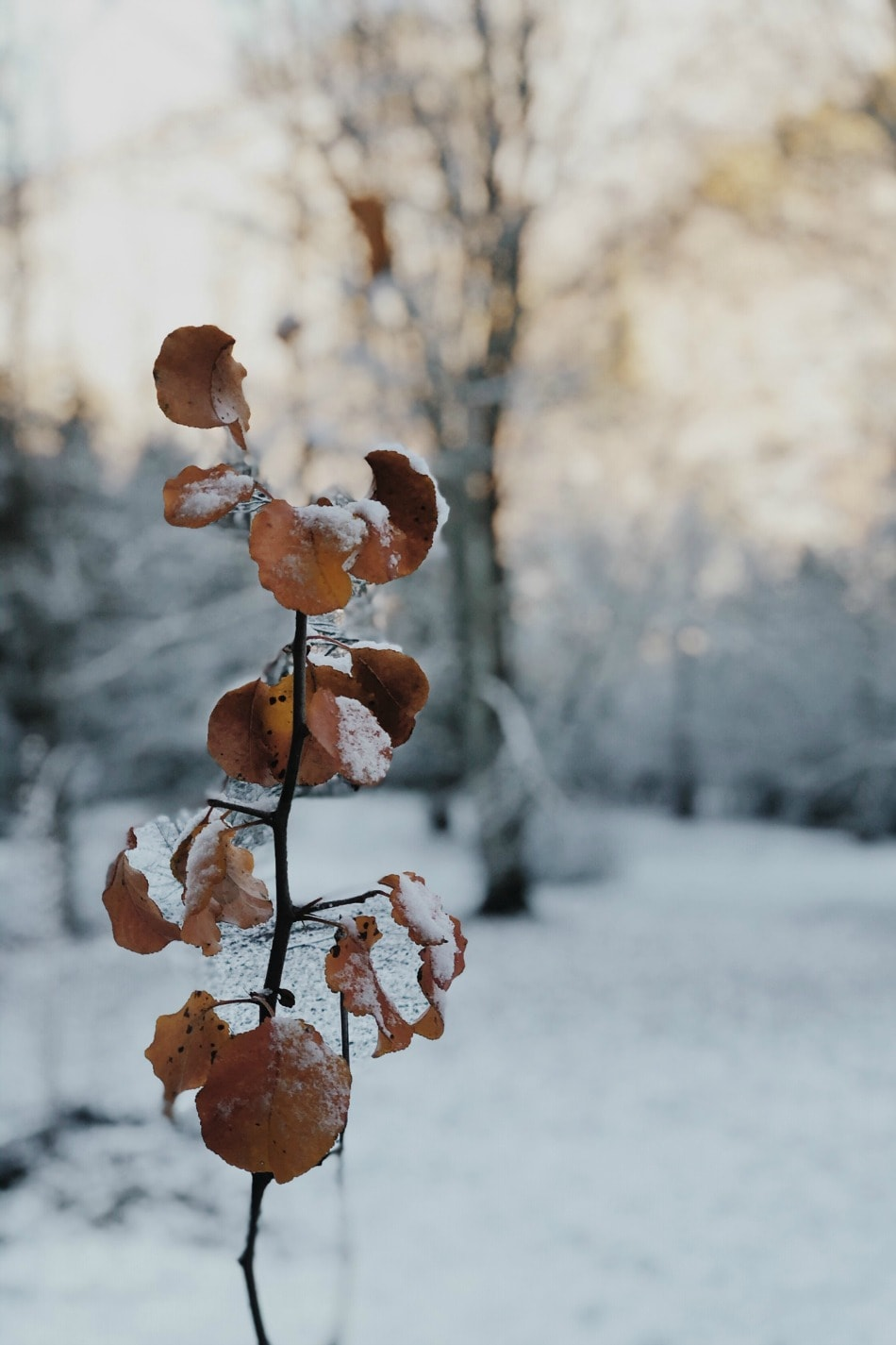 plant covered in snow - winter
