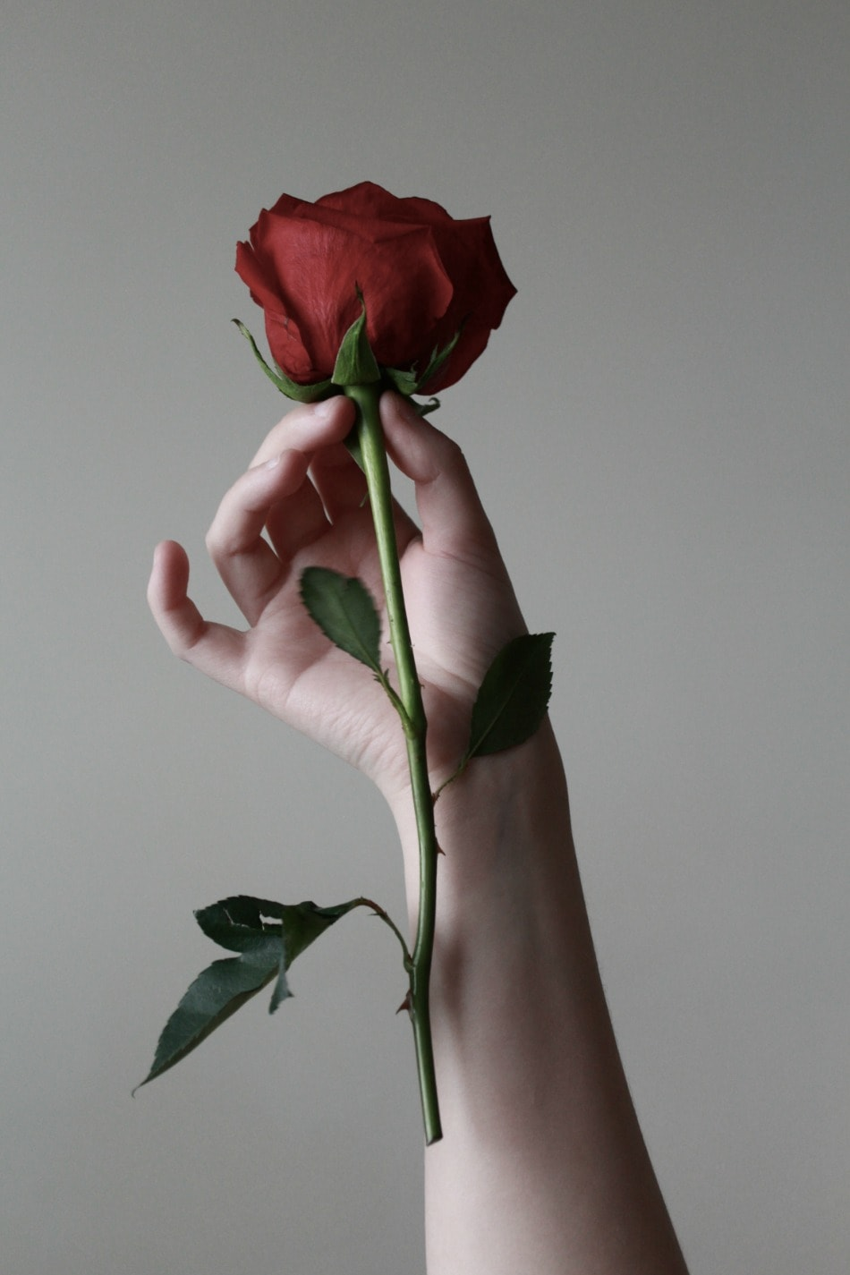 holding a single rose
