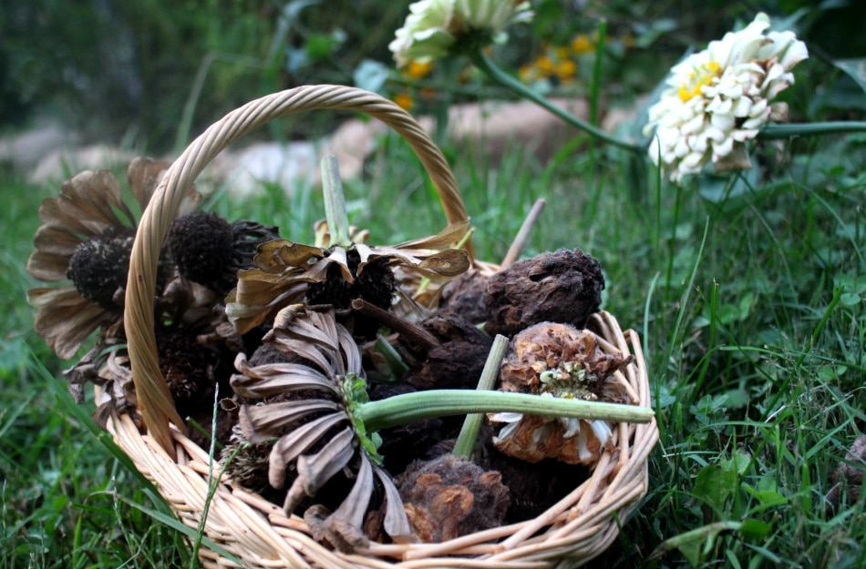 dried flower blooms in basket outdoors