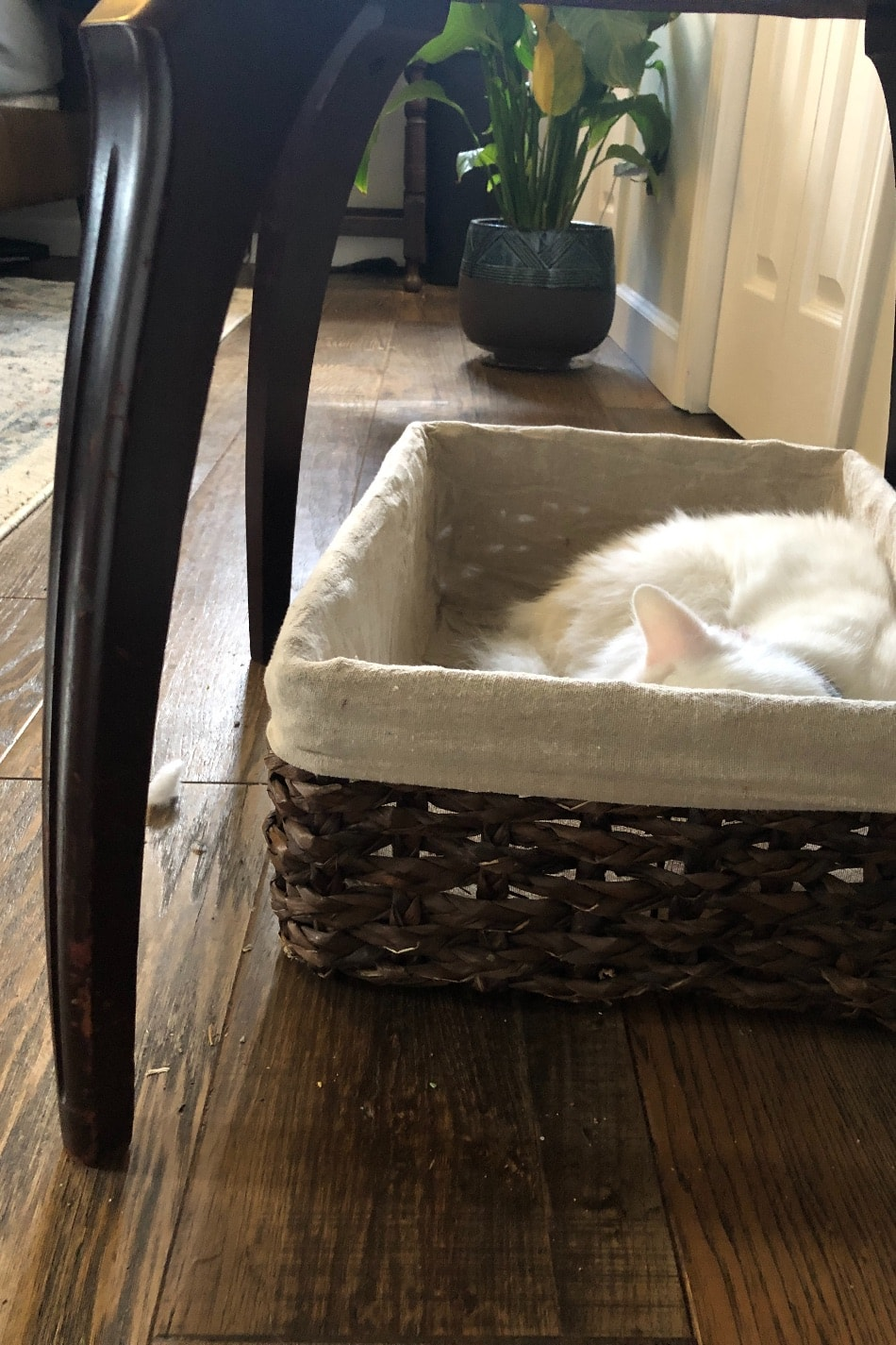 cat sleeping in basket